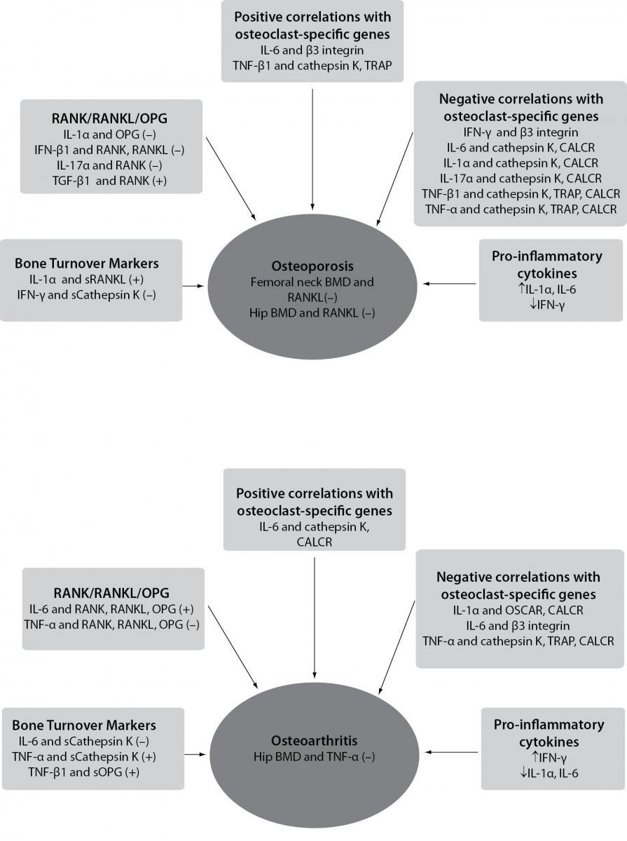 Osteoimmunology and the influence of pro-inflammatory