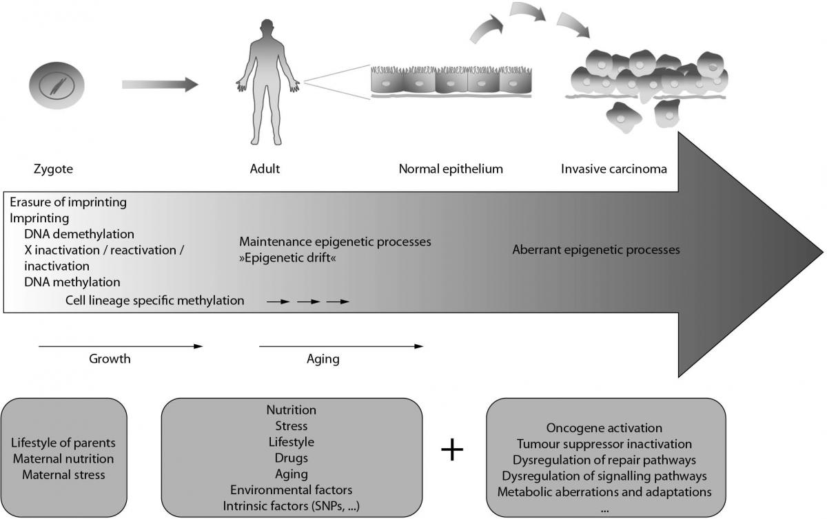 Aberrant methylation patterns in cancer: a clinical view - Biochemia